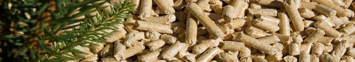 biomassa 5